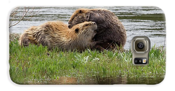 Beaver Pair Grooming One Another Galaxy S6 Case by Ken Archer