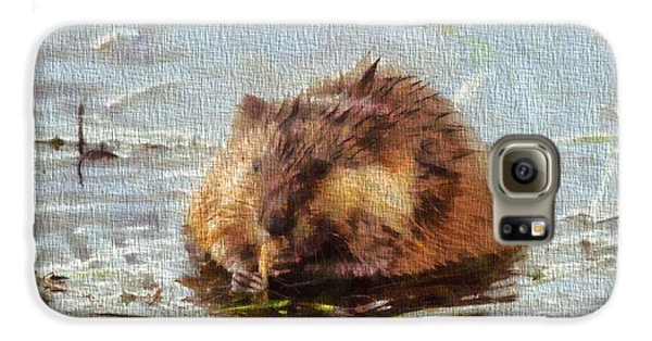 Beaver Portrait On Canvas Galaxy S6 Case by Dan Sproul