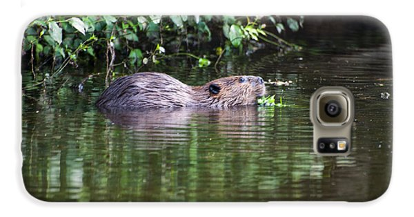 beaver swims in NC lake Galaxy S6 Case by Chris Flees