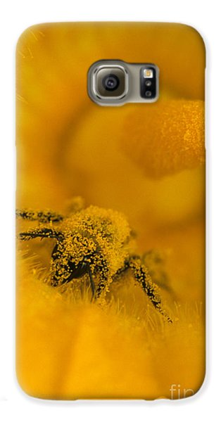 Bee In Pollen Galaxy S6 Case