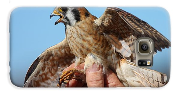 Behold The American Kestrel Galaxy S6 Case by Nathan Rupert