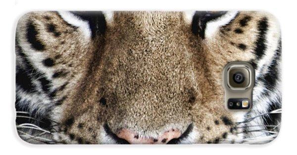 Bengal Tiger Eyes Galaxy S6 Case by Tom Mc Nemar