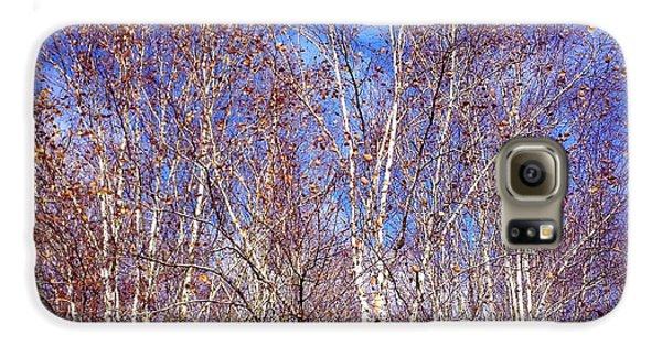 Orange Galaxy S6 Case - Birch Trees And Blue Sky In Autumn by Matthias Hauser