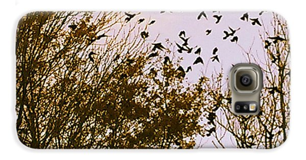 Birds Of A Feather Flock Together Galaxy S6 Case