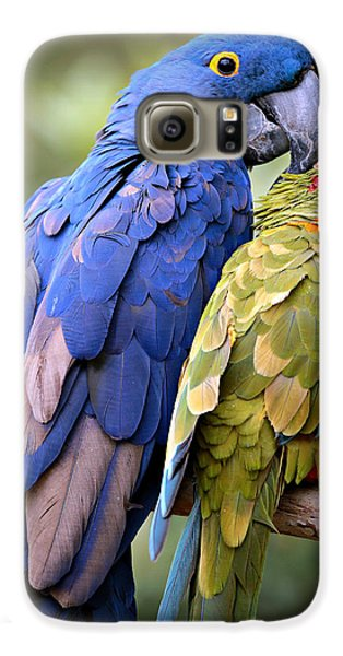 Macaw Galaxy S6 Case - Birds Of A Feather by Stephen Stookey