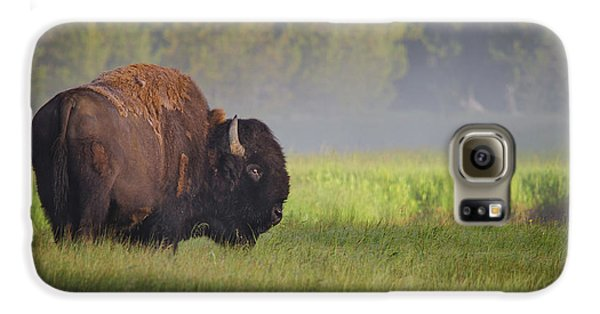 Bison In Morning Light Galaxy S6 Case