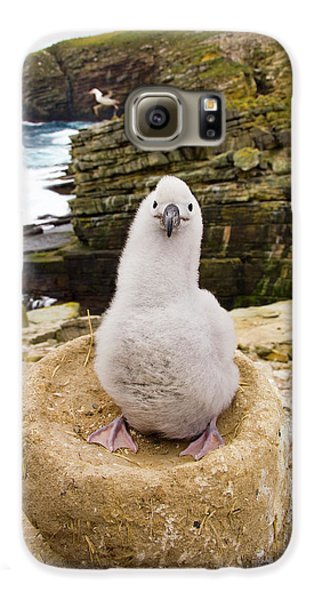 Black-browed Albatross Chick Falklands Galaxy S6 Case by