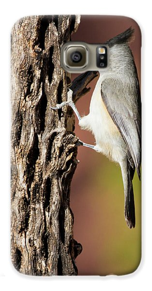 Titmouse Galaxy S6 Case - Black-crested Titmouse (baeolophus by Larry Ditto