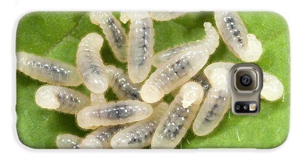 Black Garden Ant Larvae Galaxy S6 Case by Nigel Downer