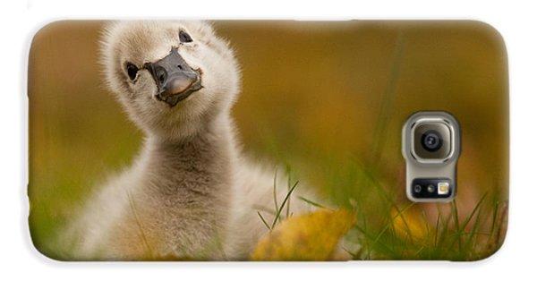 Swan Galaxy S6 Case - Black Swan Baby by Robert Adamec