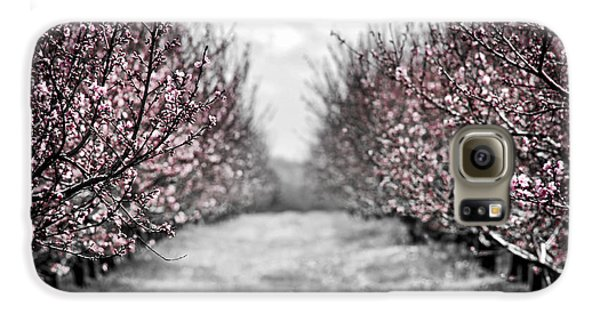Blooming Peach Orchard Galaxy S6 Case by Elena Elisseeva