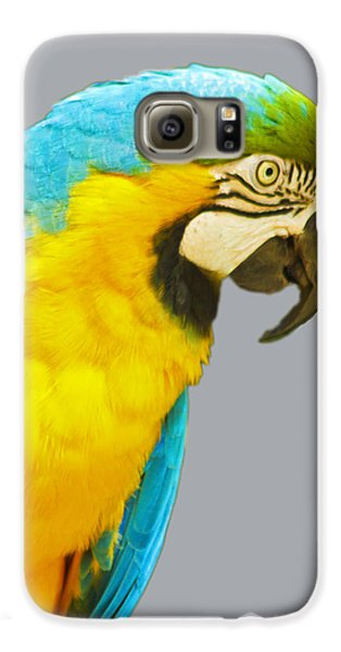 Blue And Gold Macaw Galaxy S6 Case by Bill Barber