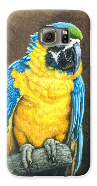 Macaw Galaxy S6 Case - Blue And Gold Macaw by Paul Krapf