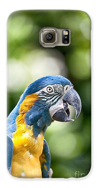 Blue And Gold Macaw V2 Galaxy S6 Case by Douglas Barnard