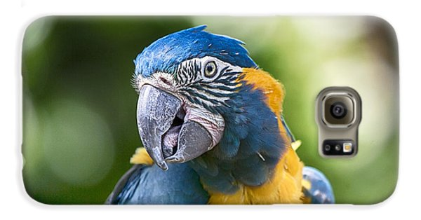 Blue And Gold Macaw V3 Galaxy S6 Case
