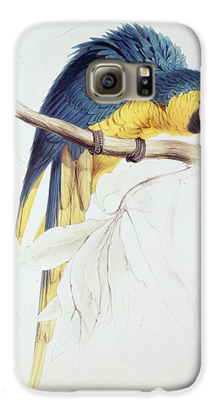 Macaw Galaxy S6 Case - Blue And Yellow Macaw by Edward Lear