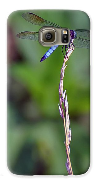 Blue Dragonfly On A Blade Of Grass  Galaxy S6 Case