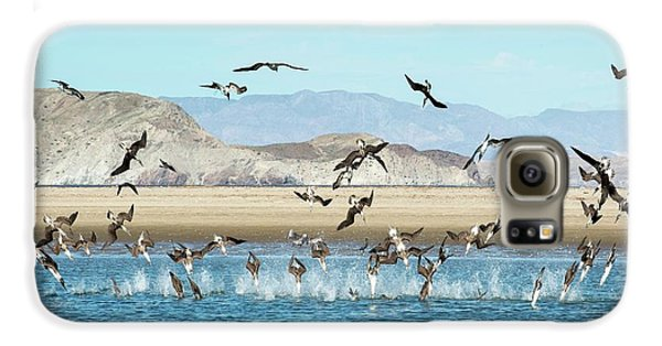 Blue-footed Boobies Feeding Galaxy S6 Case