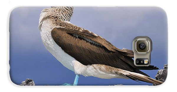 Blue-footed Booby Galaxy S6 Case by Tony Beck