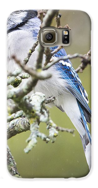 Blue Jay In The Rain Galaxy S6 Case