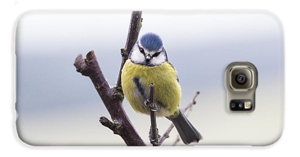Titmouse Galaxy S6 Case - Blue Tit by Tim Gainey
