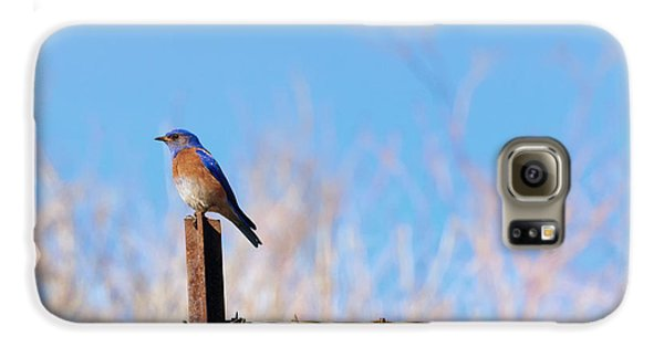 Bluebird On A Post Galaxy S6 Case by Mike  Dawson