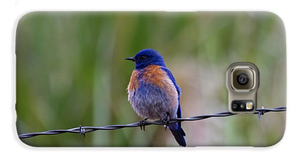 Bluebird On A Wire Galaxy S6 Case by Mike  Dawson
