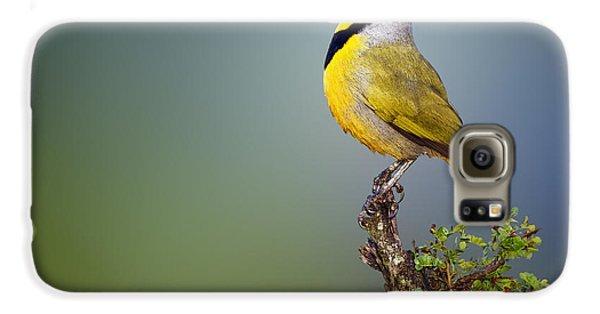 Birds Galaxy S6 Case - Bokmakierie Bird - Telophorus Zeylonus by Johan Swanepoel