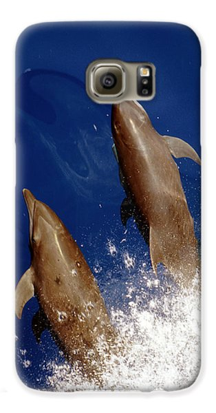 Bottlenose Dolphins Tursiops Truncatus Galaxy S6 Case by Anonymous