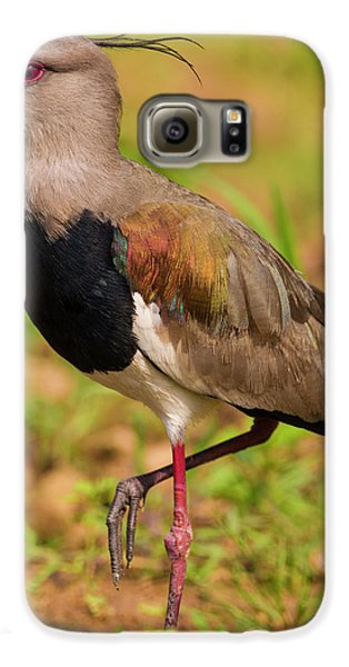 Brazil A Southern Lapwing (vanellus Galaxy S6 Case