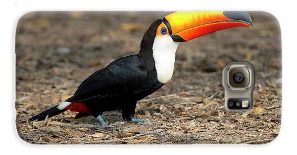 Brazil, Mato Grosso, The Pantanal, Toco Galaxy S6 Case