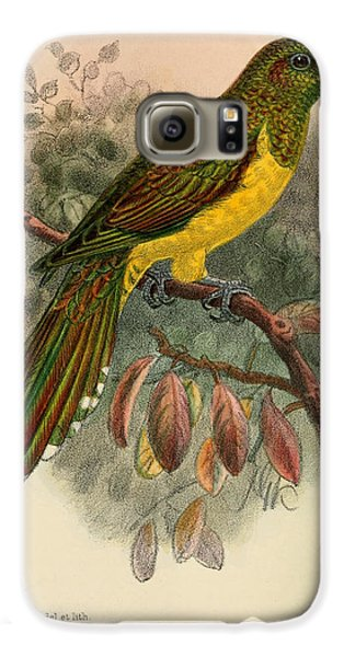 Cuckoo Galaxy S6 Case - Bronze Cuckoo by Dreyer Wildlife Print Collections