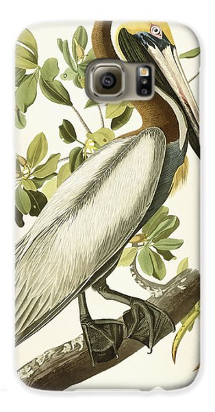 Pelican Galaxy S6 Case - Brown Pelican by John James Audubon