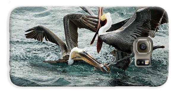 Brown Pelicans Stealing Food Galaxy S6 Case