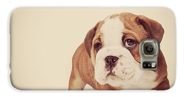 Bulldog Pup Galaxy S6 Case