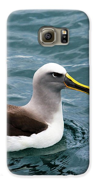 Buller's Albatross (thalassarche Bulleri Galaxy S6 Case by Micah Wright