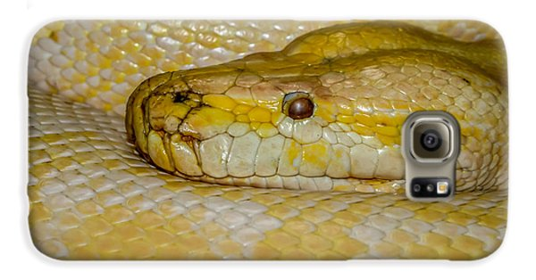 Burmese Python Galaxy S6 Case by Ernie Echols