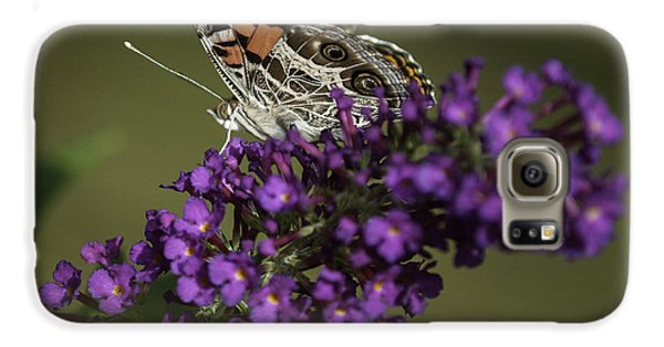 Butterfly 0001 Galaxy S6 Case