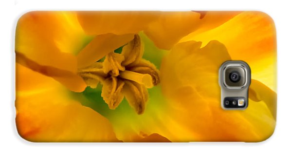 Butterfly Daffodil Springtime Galaxy S6 Case