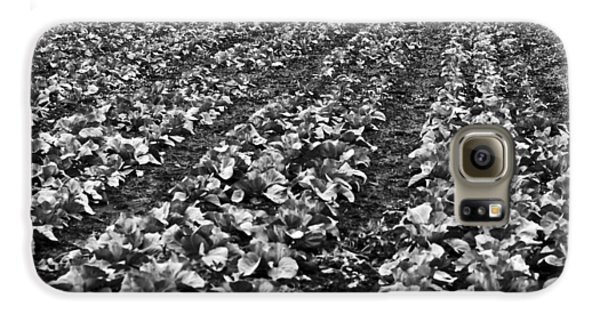 Galaxy S6 Case featuring the photograph Cabbage Farming by Ricky L Jones