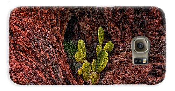 Cactus Dwelling Galaxy S6 Case