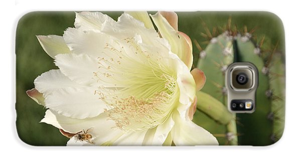 Cactus Flower And Bee Galaxy S6 Case