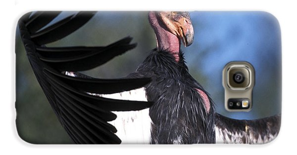California Condor Galaxy S6 Case