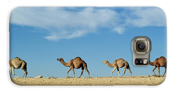 Camel Train Galaxy S6 Case