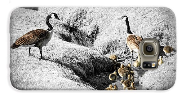 Canada Geese Family Galaxy S6 Case by Elena Elisseeva
