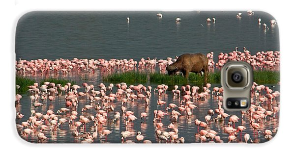 Cape Buffalo And Lesser Flamingos Galaxy S6 Case by Panoramic Images