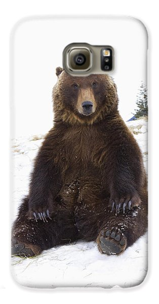 Captive Grizzly During Winter Sits Galaxy S6 Case by Doug Lindstrand