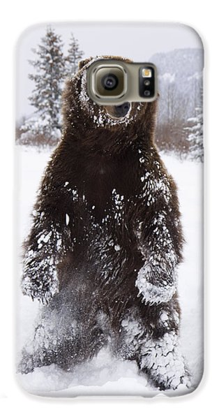 Captive Grizzly Stands On Hind Feet Galaxy S6 Case by Doug Lindstrand