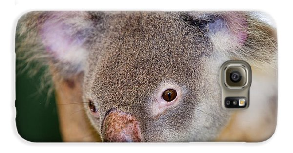 Captive Koala Bear Galaxy S6 Case