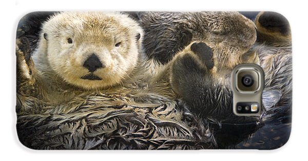 Otter Galaxy S6 Case - Captive Two Sea Otters Holding Paws At by Tom Soucek